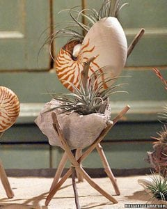 How to Make Seashell and Driftwood Planters